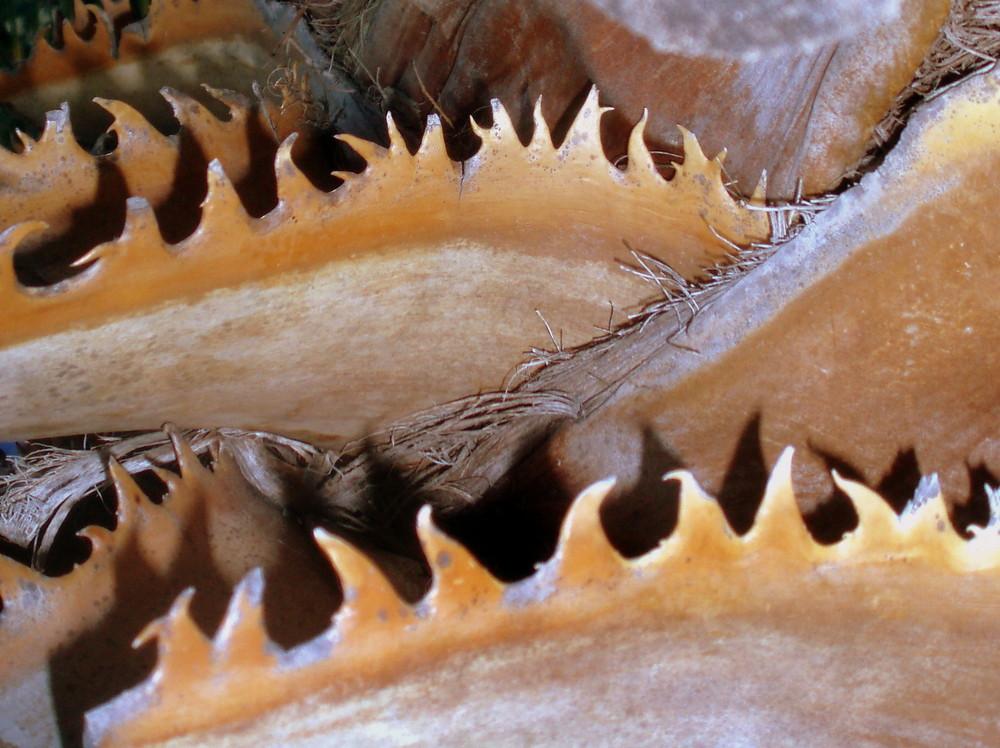 Palmendetail