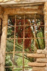 palmenfrüchte...