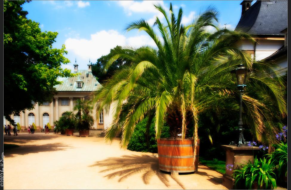 Palmengarten