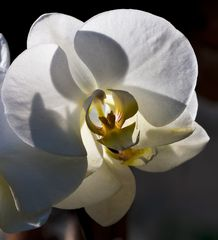Palmengarten Frankfurt - Orchidee 01