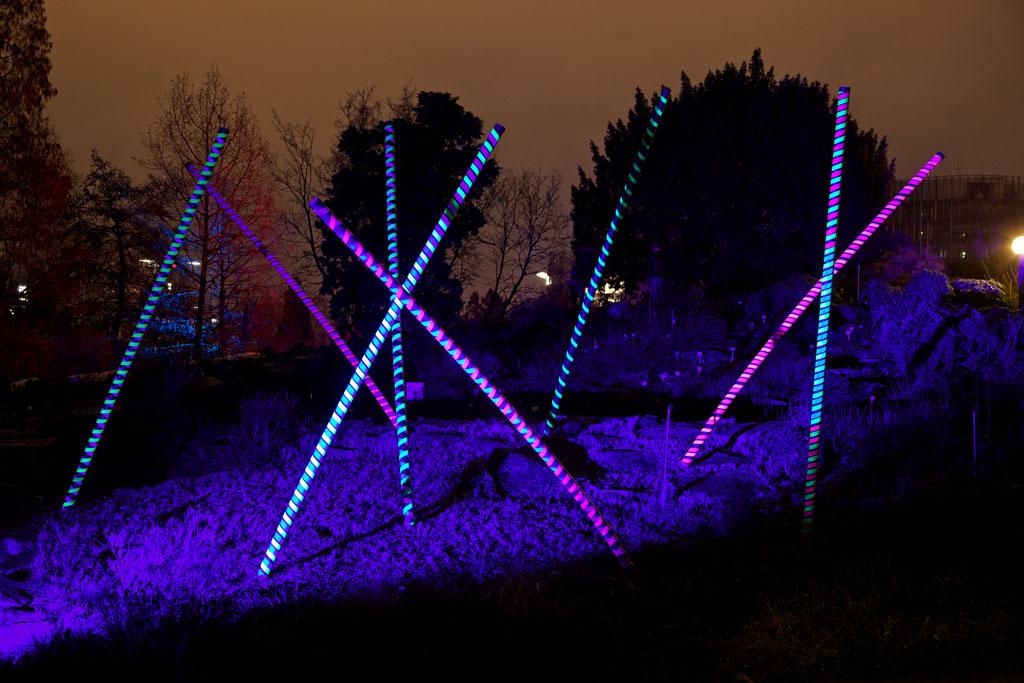 Palmengarten Frankfurt - Winterlicht 11