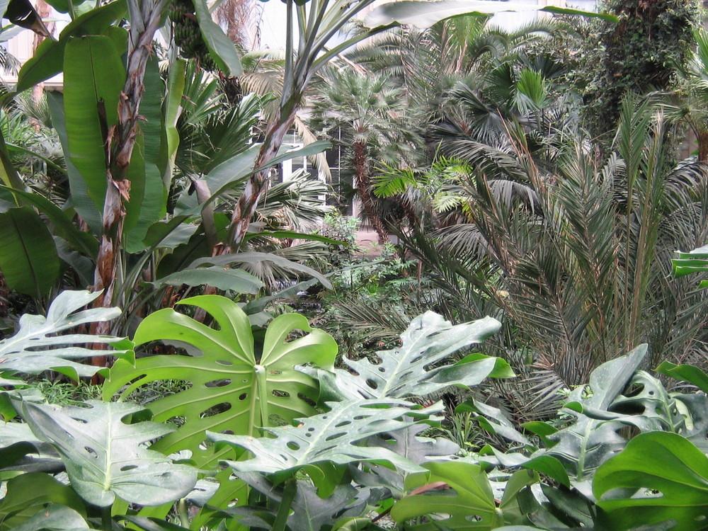 Palmengarten in Frankfurt am Main