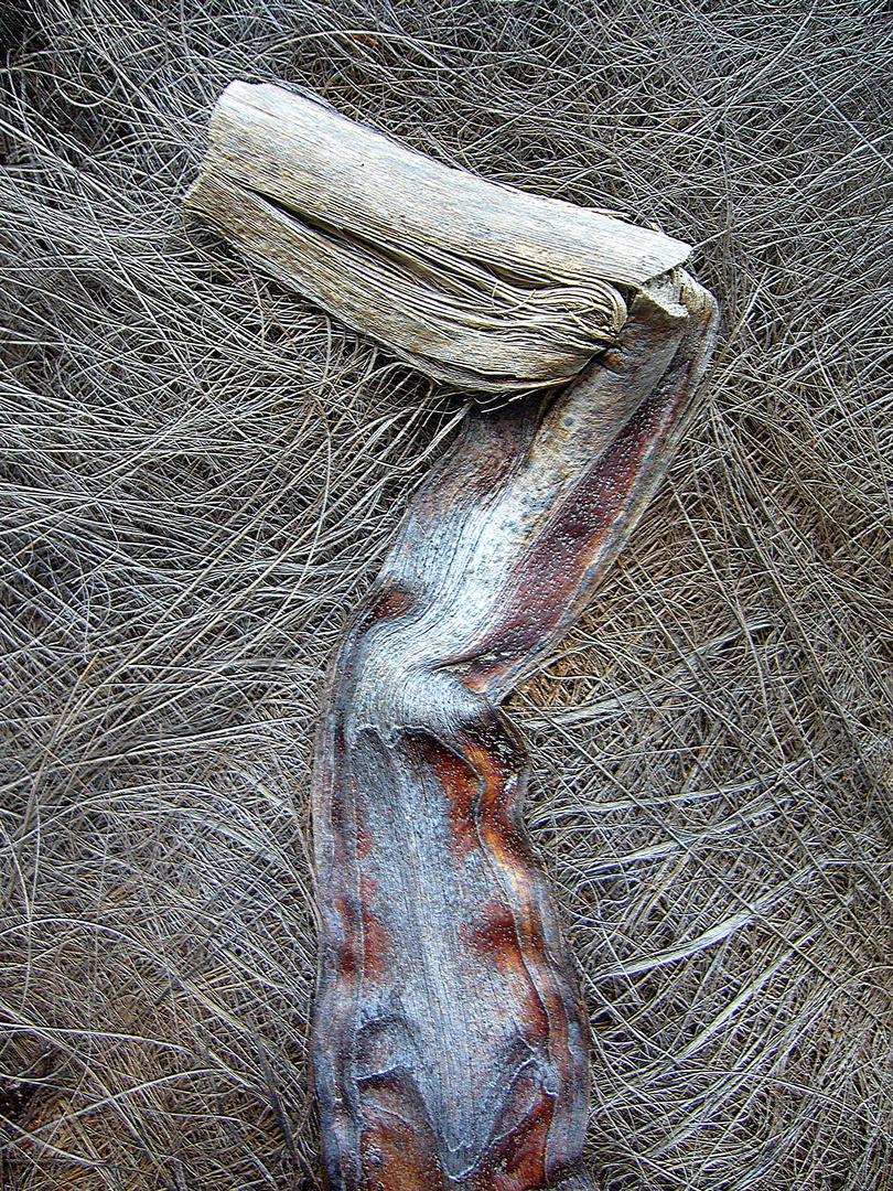 Palmenstamm