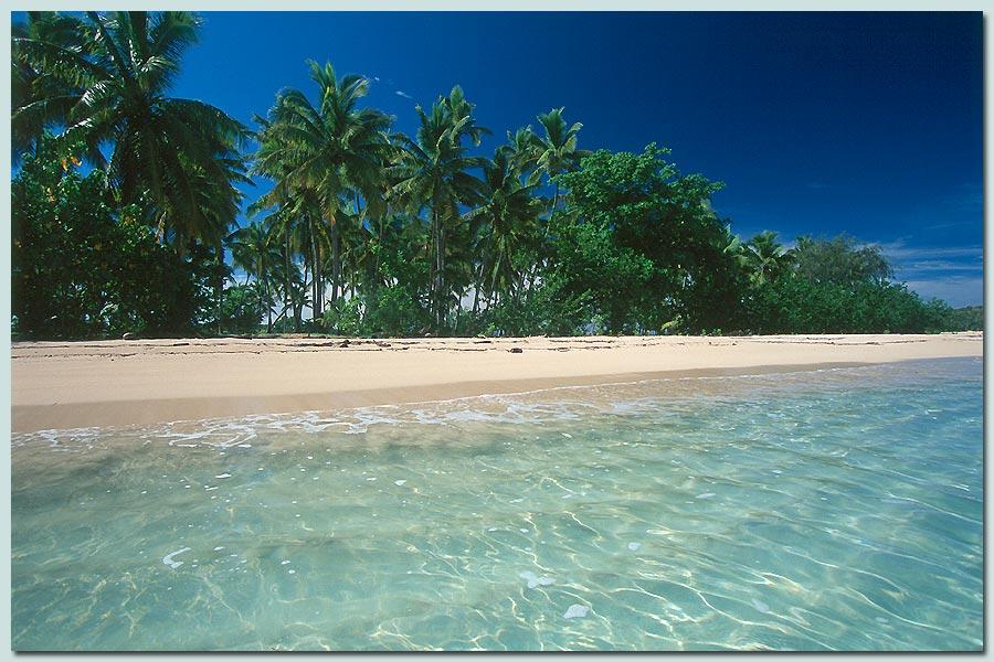 Palmenstrand auf Fiji