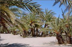 Palmenstrand von Vai, Kreta