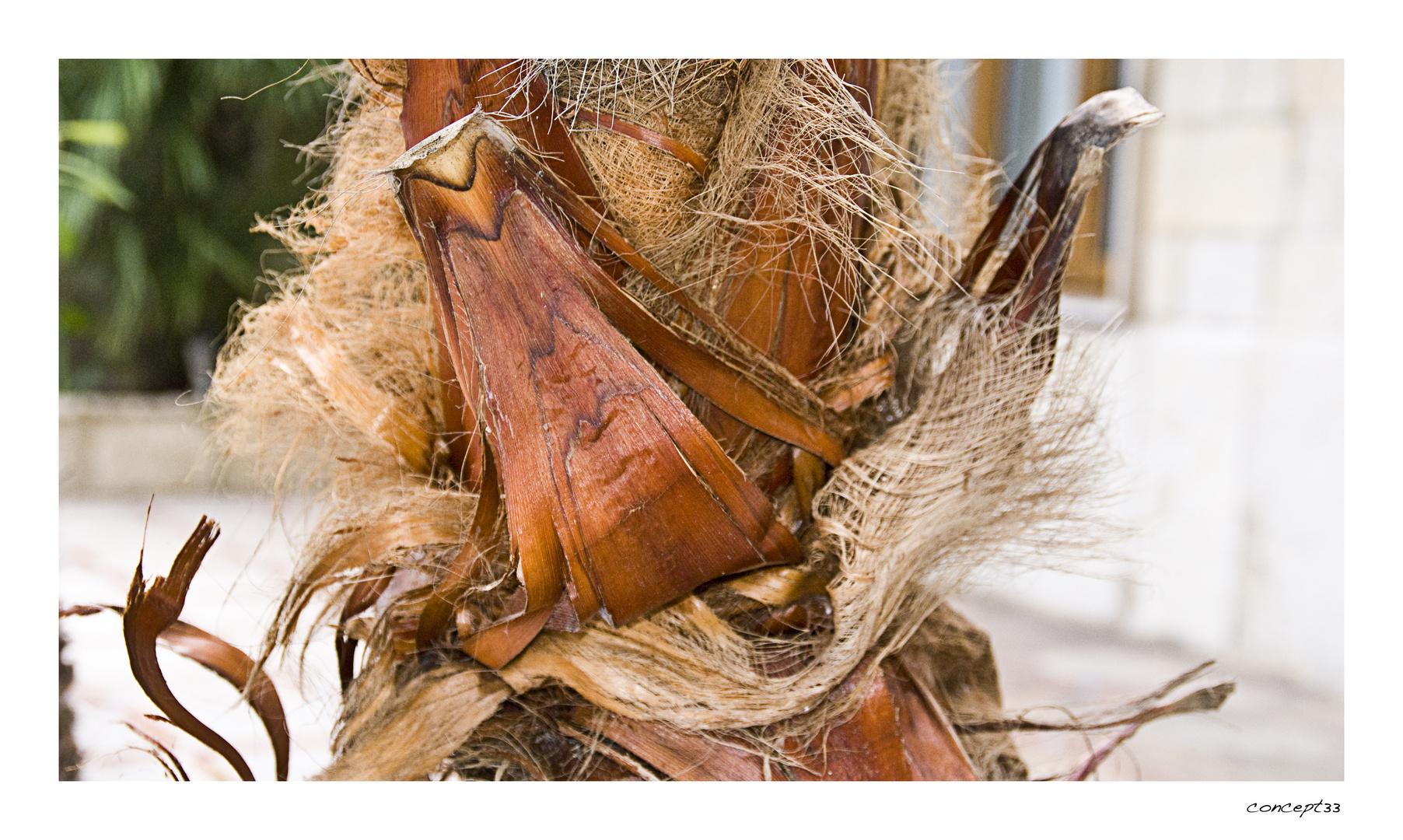 Palmenteilchen