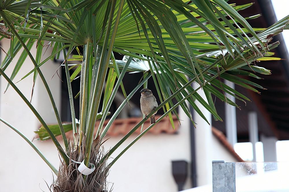 Palmenvogel :-)))