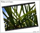 Palmes de Cannes