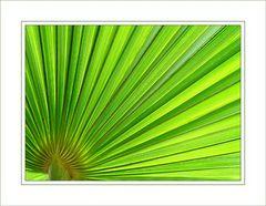 Palmfächer