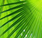 Palmfächergeometrie