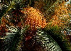 .. palmizio ..