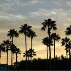 Palms of Florida
