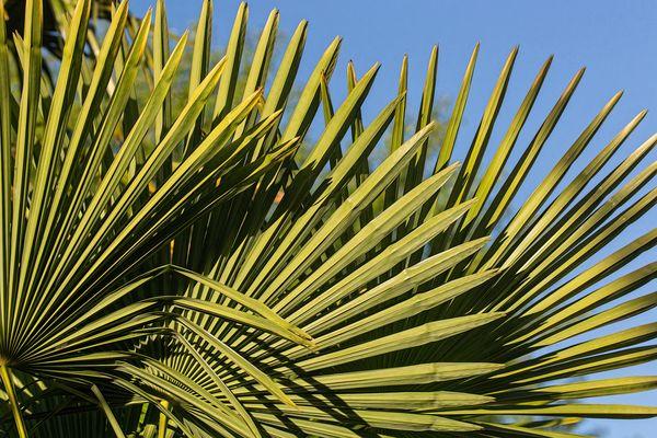 Palmsonntag Fotos Bilder Auf Fotocommunity