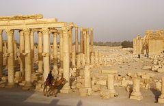 Palmyra (2)