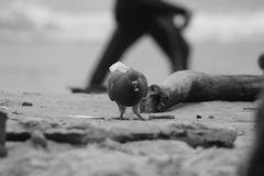 Paloma en la playa