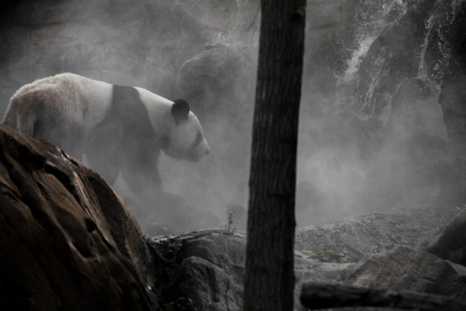 Panda dans la brume