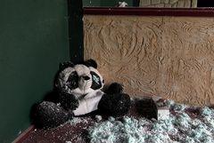 Panda Jacksons letzte Ruhe