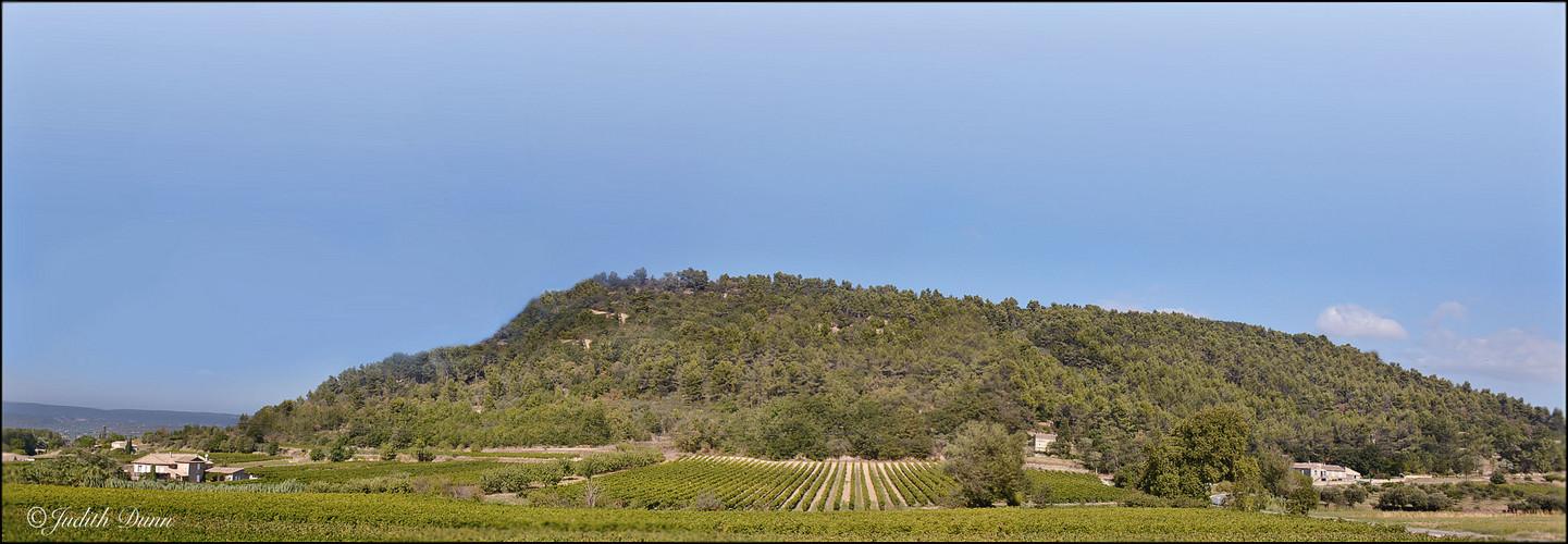 Pano of a vinyard in Menerbes