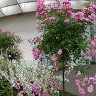 Panorama bei Rosenausstellung