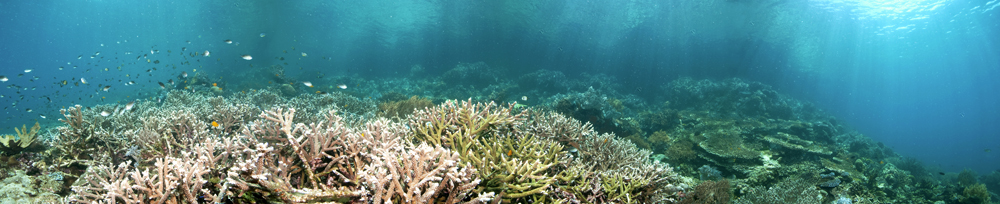 - Panorama of a healthy reef -