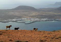 Panorama y cabras