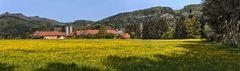 Panoramablick auf Löwenzahnwiese mit Bauernhof!