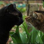 Panther & Tiger