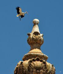 Papa Storch im Landeanflug auf den Kirchturm der Igreja do Carmo