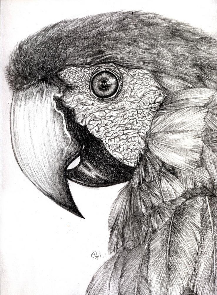 Papagei Foto Bild Kunstfotografie Kultur Gemälde