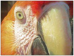 Papagei Detail