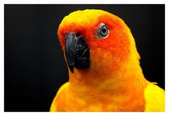Papagei - Wilhelma