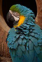Papagei(en) #1