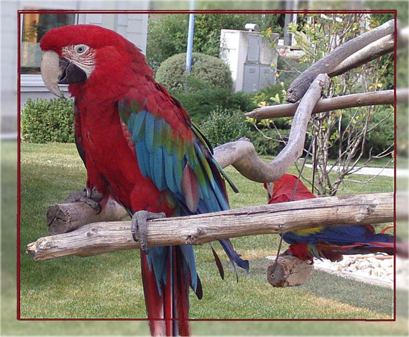 Papageien in einem Freigehege