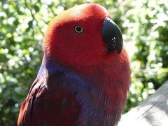 Papageien-Posing
