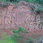 Papageienlecke im Tambopata