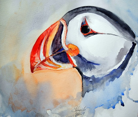Papageientaucher - Puffin