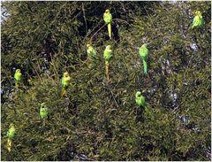 Papageienversammlung