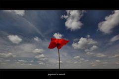 papaveri e nuvole (3)
