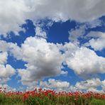 Papaveri e nuvole