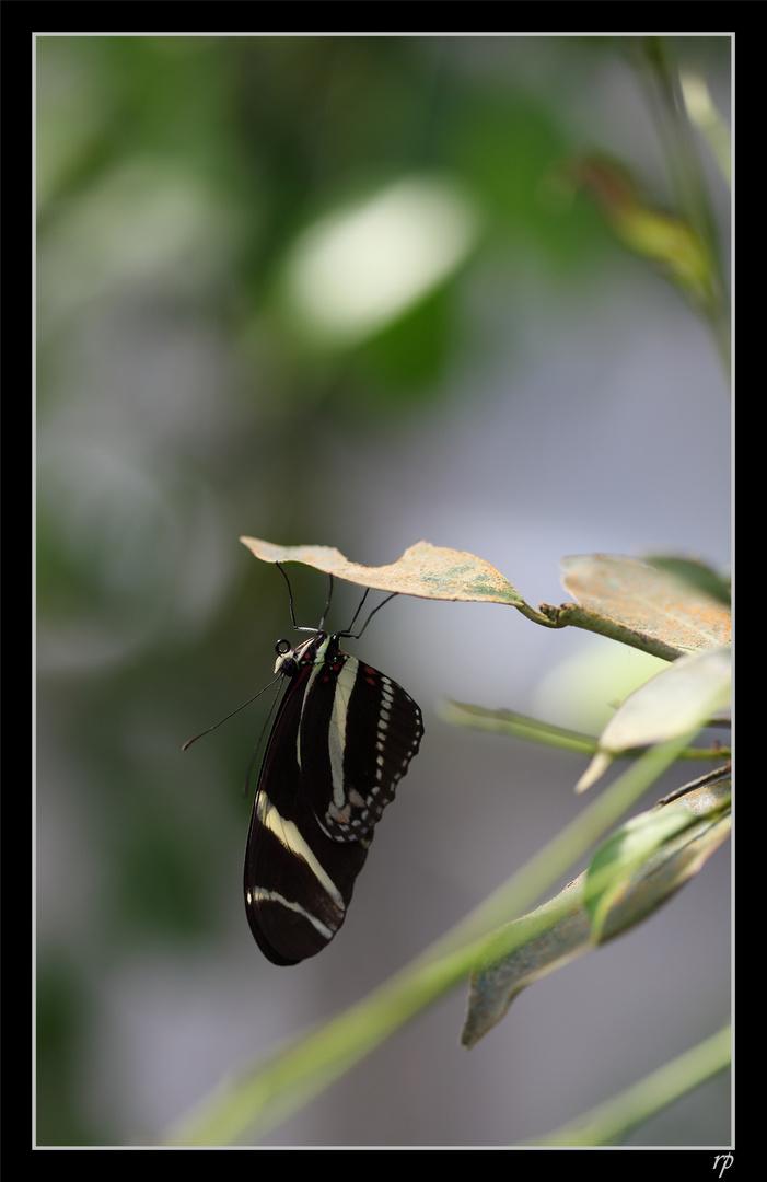 Papiliorama de Kerzers 9