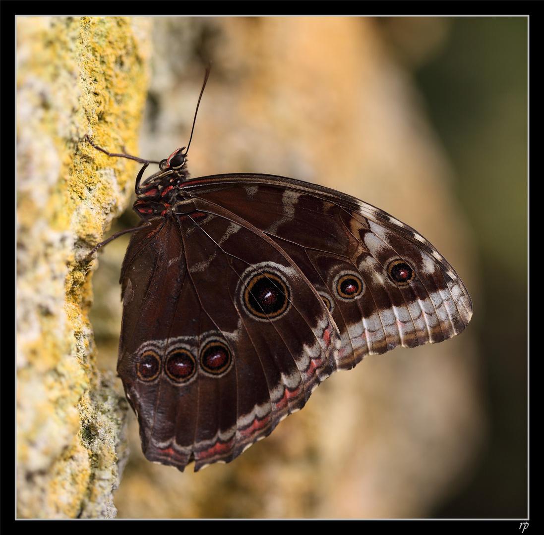 Papiliorama Kerzers 6