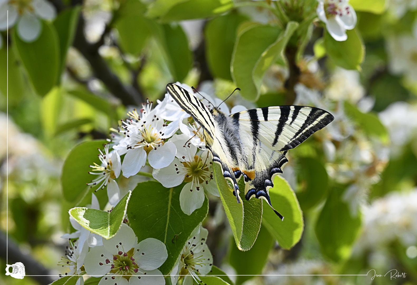 Papillon 1 avec signature 2020
