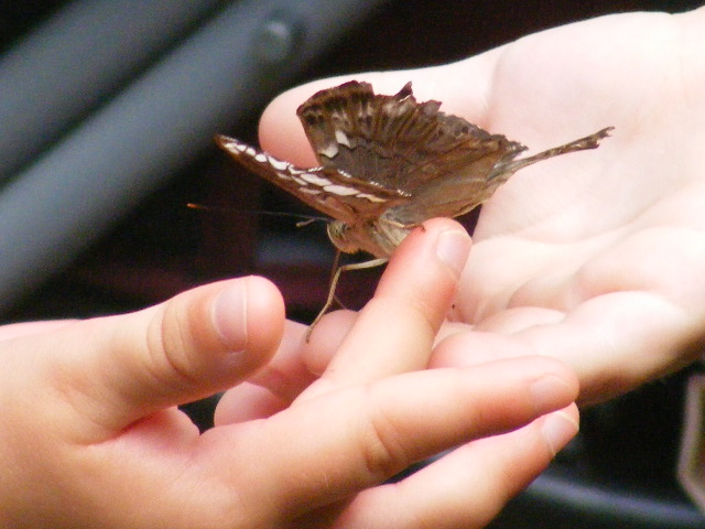 papillon dans la main