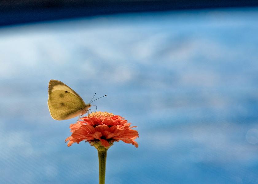 Papillon dans l'espace