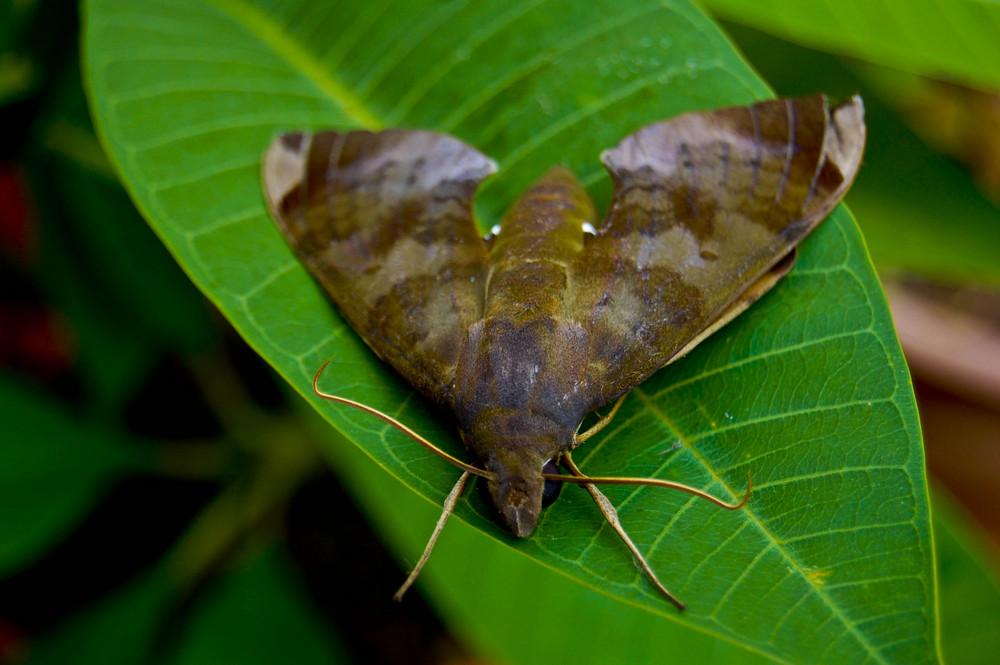 papillon de nuit2
