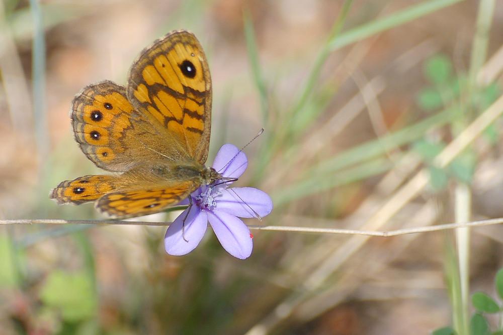 Papillon, fleur et puceron