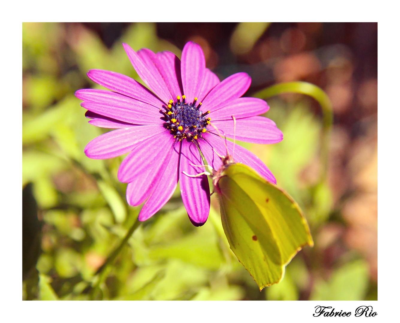 Papillon n°2
