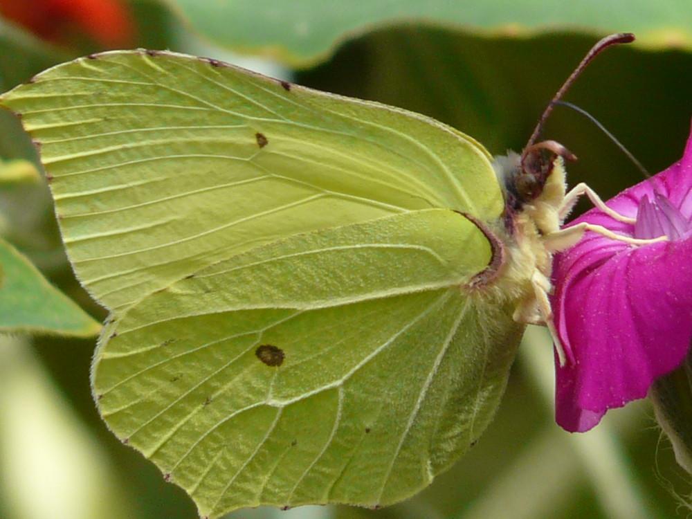 Papillon ou feuille ?