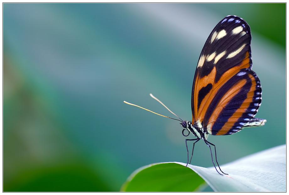 ...papillon outlook...