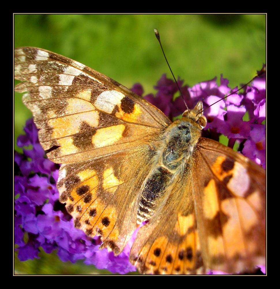 papillon recherche soleil